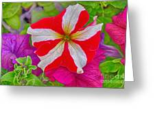 Colorful Garden Flower Greeting Card