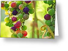 Colorful Grapes Greeting Card