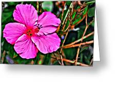 Colorful Hibiscus Greeting Card