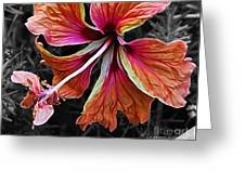 Colorful Hibiscus On Black And White 2 Greeting Card by Kaye Menner