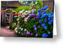 Colorful Hydrangea At The Gate. Giethoorn. Netherlands Greeting Card