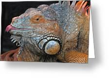 colorful Iguana Greeting Card