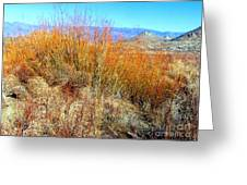 Colorful In The Desert Greeting Card
