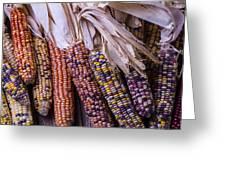 Colorful Indian Corn Greeting Card