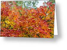 Colorful Leaves In Autumn Greeting Card