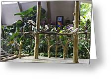 Colorful Macaws And Other Small Birds On Trees At An Exhibit Greeting Card