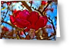 Colorful Magnolia Blossom Greeting Card