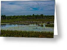 Colorful Marsh Greeting Card by Jason Brow