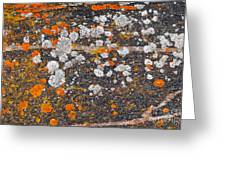 Colorful Moss Spots On A Gneiss Rock Greeting Card