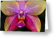 Colorful Orchid Greeting Card