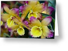 Colorful Orchids Greeting Card