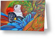 Colorful Parrot Greeting Card