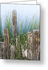Colorful Planter And Timber Supports Greeting Card