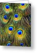 Colorful Plumage Of Peacock Greeting Card