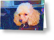 Colorful Poodle Greeting Card