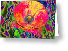 Colorful Poppy Greeting Card