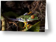 Colorful Red Eyed Tree Frog Greeting Card