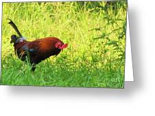 Colorful Rooster Greeting Card