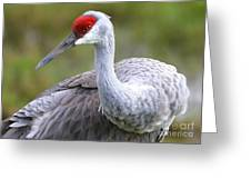 Colorful Sandhill Greeting Card