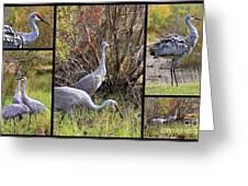Colorful Sandhill Crane Collage Greeting Card