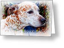 Colorful Spots Greeting Card