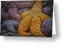 Colorful Starfish Greeting Card