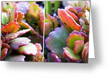 Colorful Succulents In Stereo Greeting Card