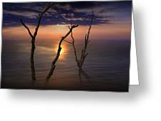 Colorful Sunset Seascape With Tree Trunks Greeting Card