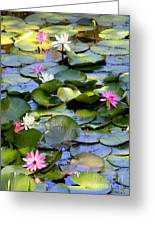Colorful Water Lily Pond Greeting Card