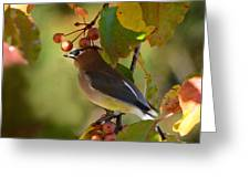 Waxwing In Fall Colors Greeting Card