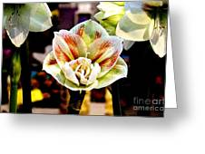 Colorful White Greeting Card