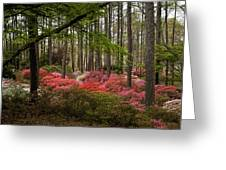 Colorful Woodland Azalea Garden Greeting Card