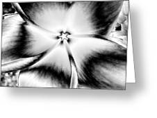 Colorless Beauty Greeting Card by Rebecca Flaig