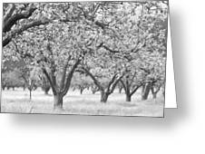 Colorless Cherry Blossoms Greeting Card