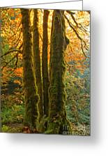 Colors In The Rainforest Greeting Card by Adam Jewell