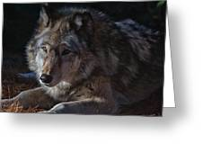 Colors Of A Wolf Greeting Card