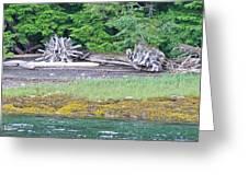 Colors Of Alaska - Layers Of Greens Greeting Card