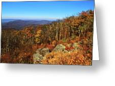 Colors Of Autumn In Shenandoah National Park Greeting Card