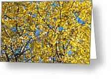 Colors Of Autumn - Yellow - Featured 3 Greeting Card