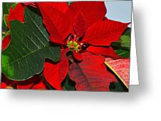 Colors Of Christmas Greeting Card