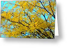 Colors Of Fall 1 Greeting Card