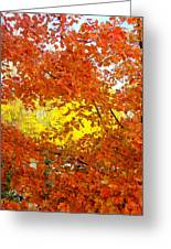 Colors Of Fall 2 Greeting Card