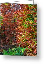 Colors Of Fall 4 Greeting Card