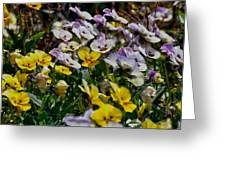 Colors Of Flower  Greeting Card