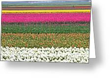 Colors Of Holland Greeting Card by Lars Ruecker