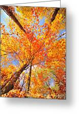 Colors Of Leaves Yellows Oranges 2884 Greeting Card