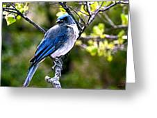 Colors Of Nature - Bluebird 002 Greeting Card