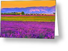 Colors Of Provence Greeting Card