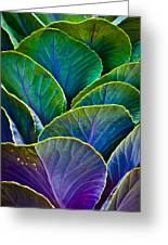 Colors Of The Cabbage Patch Greeting Card
