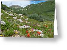Colors Of The Rainbow - Colorado Mountain Summer Greeting Card